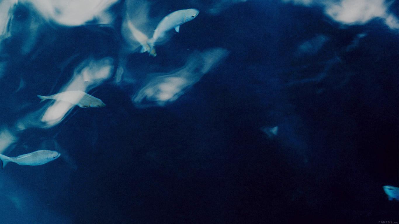 desktop-wallpaper-laptop-mac-macbook-airmo70-water-lake-fish-nature-indigo-blue-wallpaper