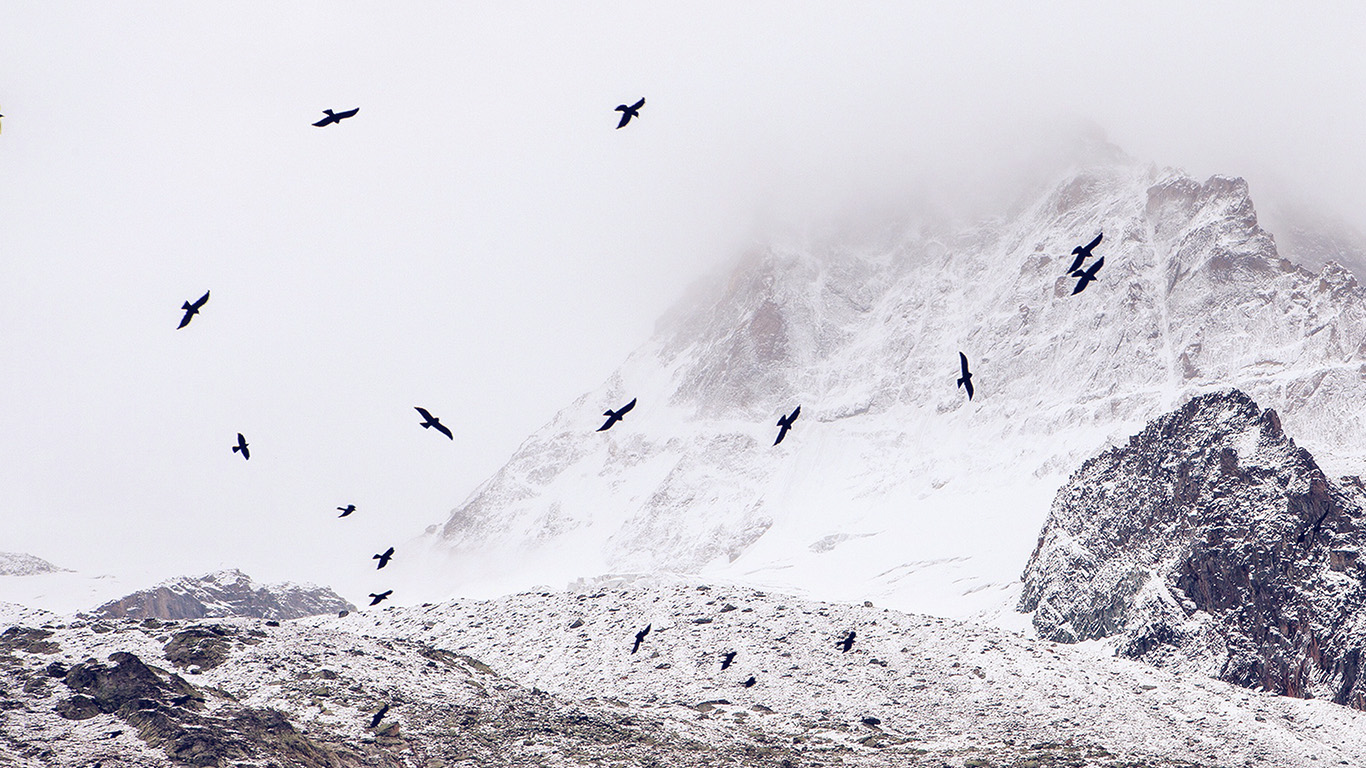 desktop-wallpaper-laptop-mac-macbook-airmo73-winter-mountain-bird-rene-reichelt-nature-wallpaper