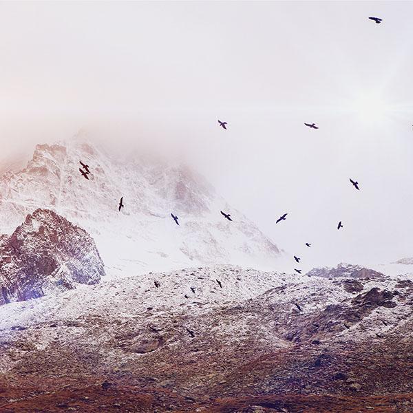 iPapers.co-Apple-iPhone-iPad-Macbook-iMac-wallpaper-mo74-winter-mountain-bird-rene-reichelt-flare-nature-wallpaper