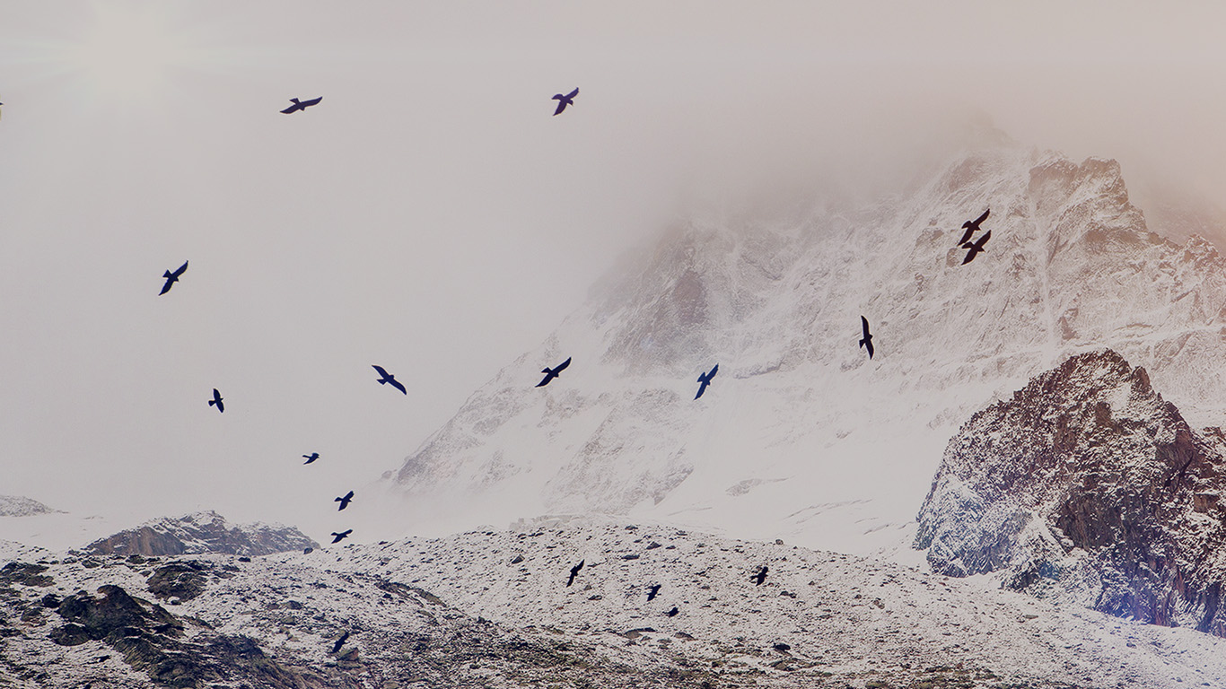 desktop-wallpaper-laptop-mac-macbook-air-mo75-winter-mountain-bird-rene-reichelt-dark-nature-wallpaper