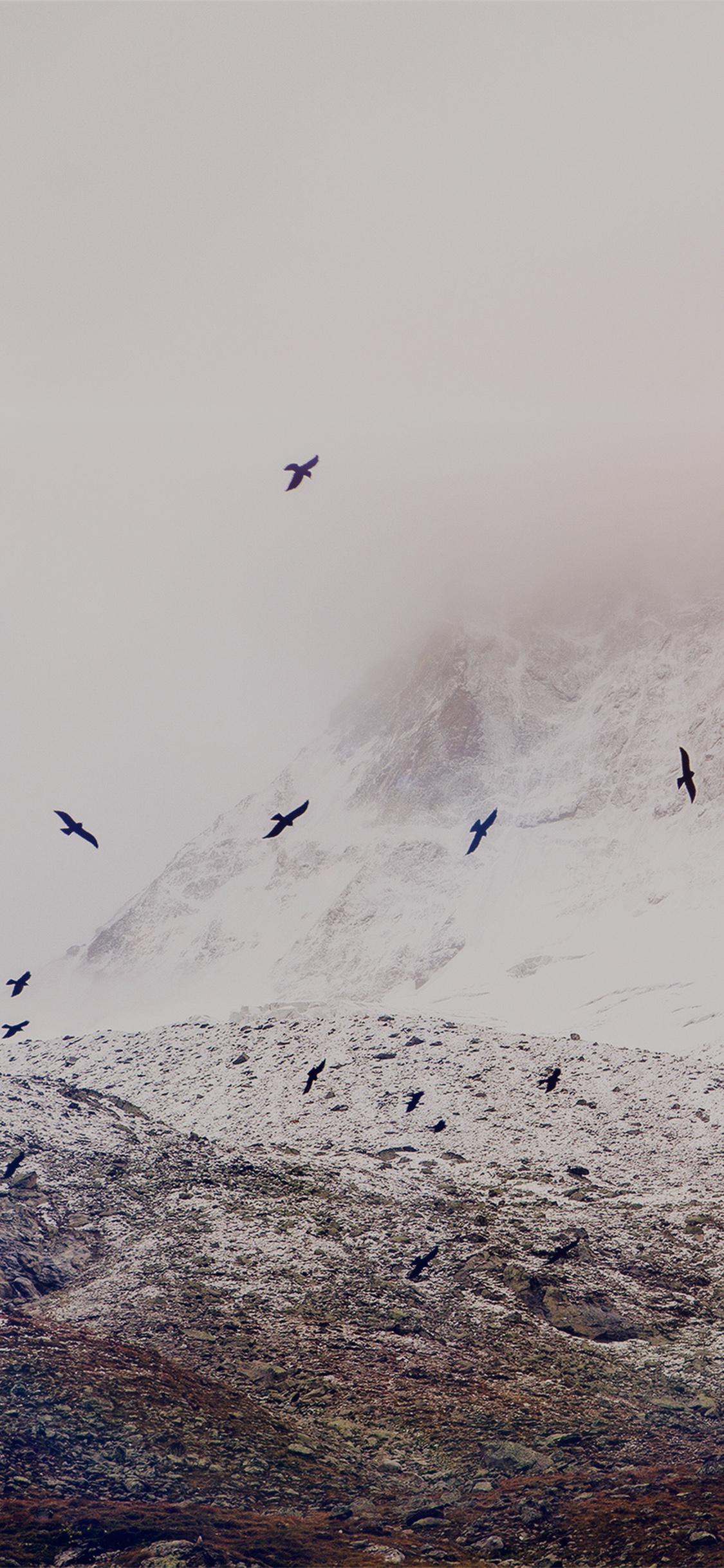 iPhoneXpapers.com-Apple-iPhone-wallpaper-mo75-winter-mountain-bird-rene-reichelt-dark-nature