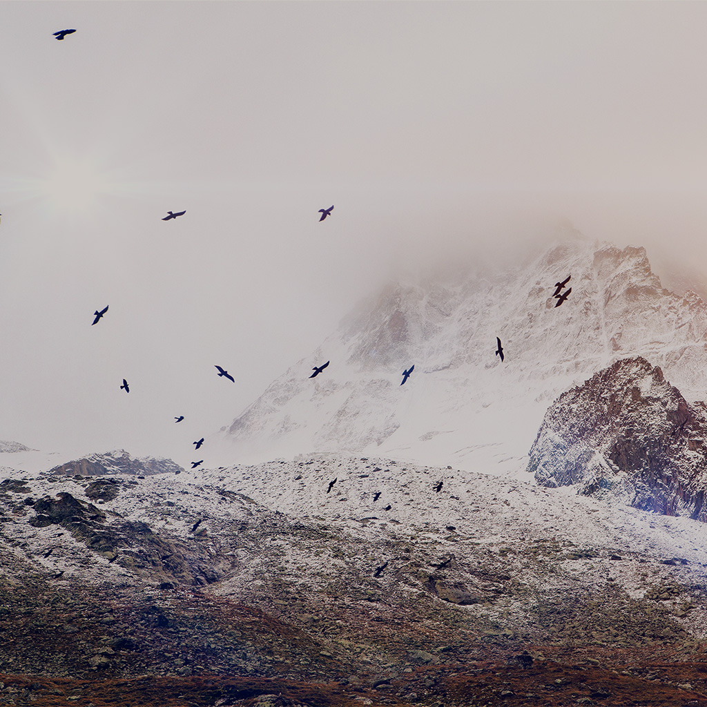 animal mountain