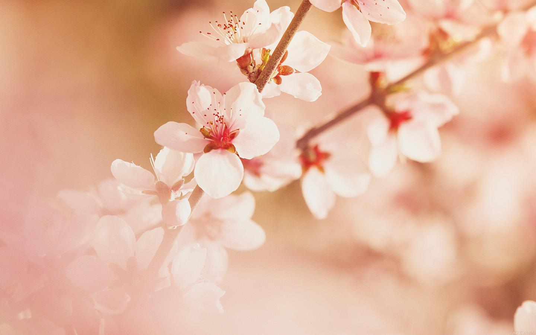 I love papers mp02 spring flower sullysully cherry - Flower wallpaper macbook ...