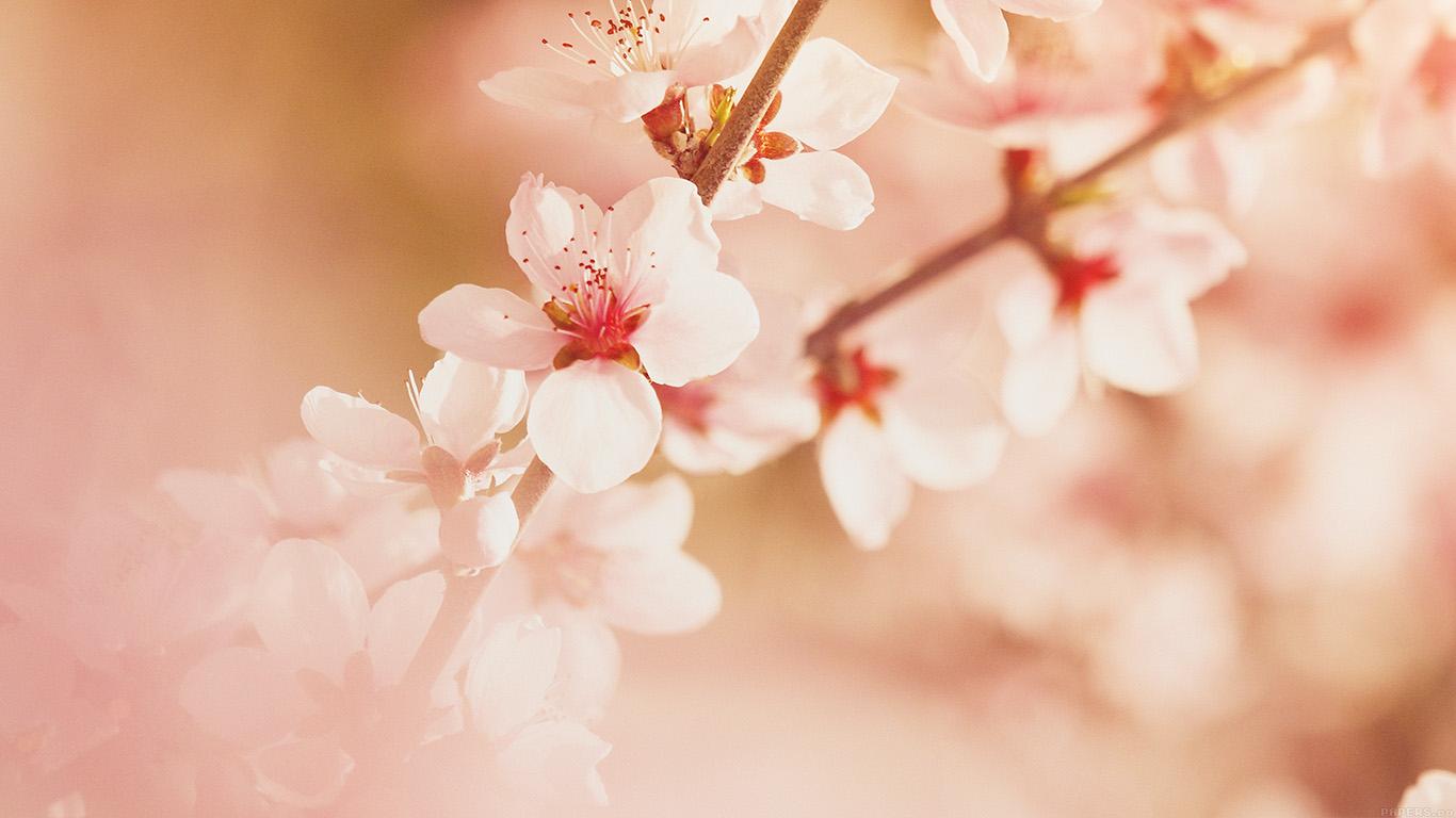 Desktop wallpaper laptop mac macbook air mp02 spring - Flower wallpaper macbook ...