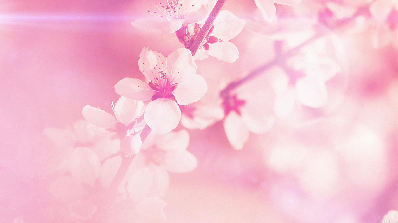 desktop-wallpaper-laptop-mac-macbook-airmp03-spring-flower-pink-cherry-blossom-flare-nature-wallpaper