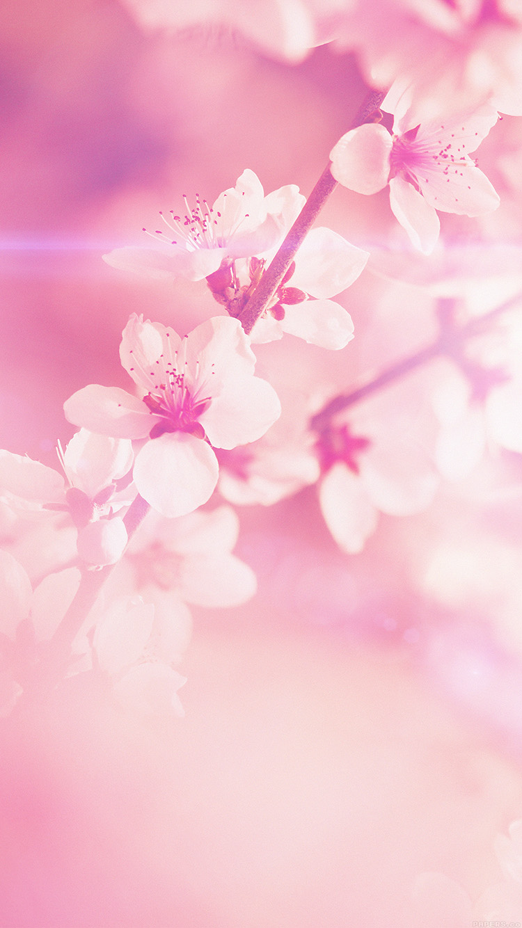 iPhone6papers.co-Apple-iPhone-6-iphone6-plus-wallpaper-mp03-spring-flower-pink-cherry-blossom-flare-nature