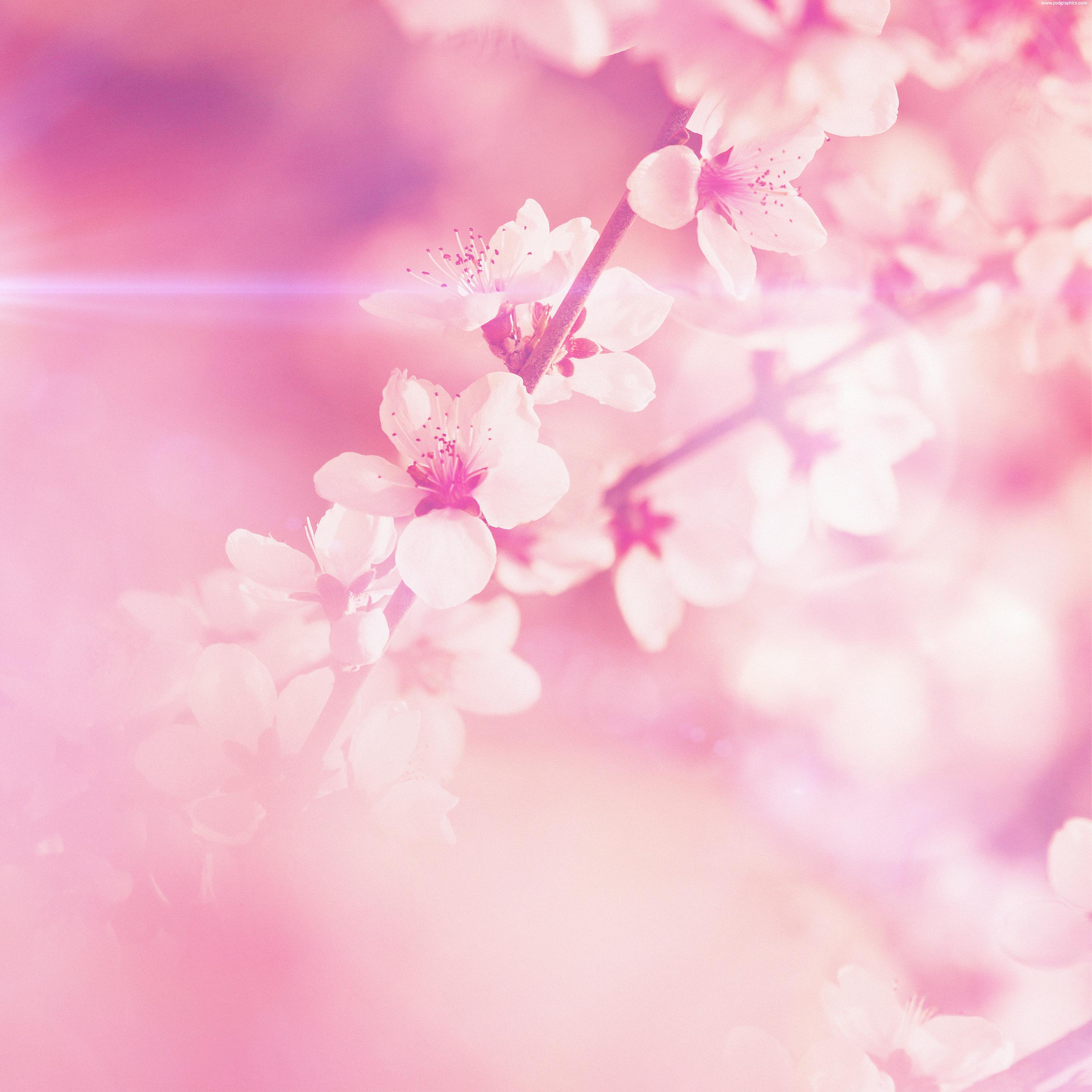 Pink Flowers Wallpaper: Large