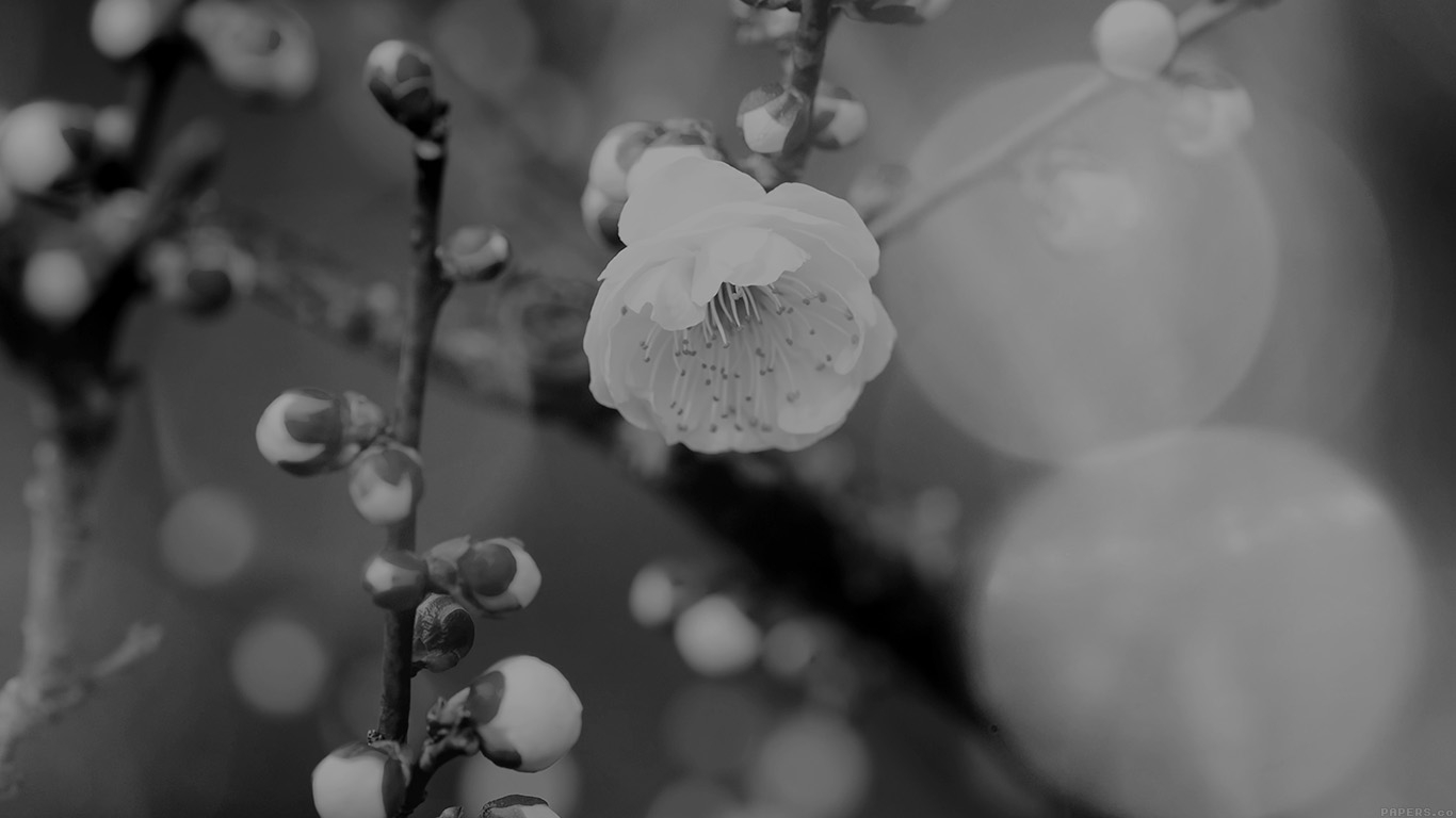 desktop-wallpaper-laptop-mac-macbook-airmp17-apricot-flower-bud-dark-spring-nature-twigs-tree-wallpaper