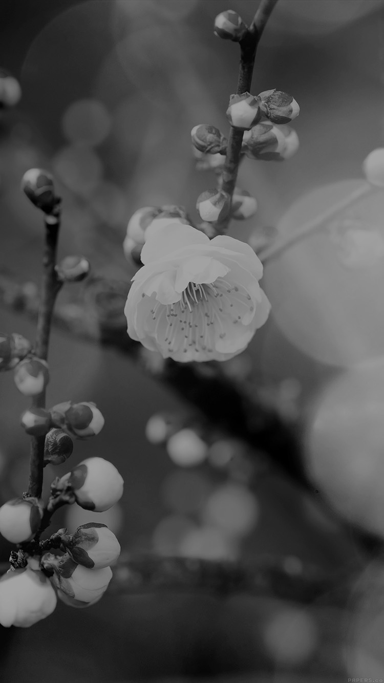 iPhonepapers.com-Apple-iPhone8-wallpaper-mp17-apricot-flower-bud-dark-spring-nature-twigs-tree
