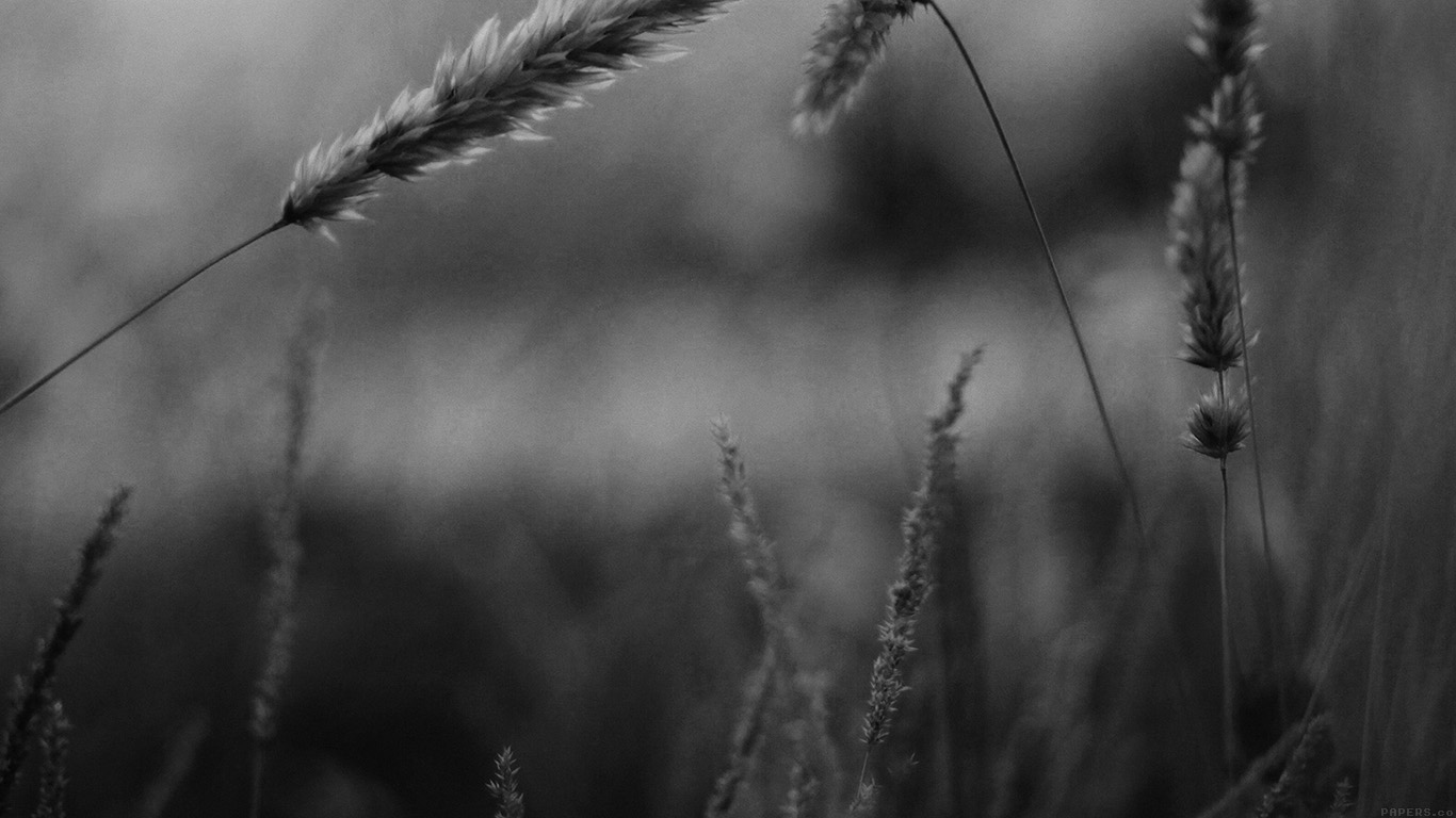 desktop-wallpaper-laptop-mac-macbook-air-mp35-reed-flower-nature-field-bw-wallpaper