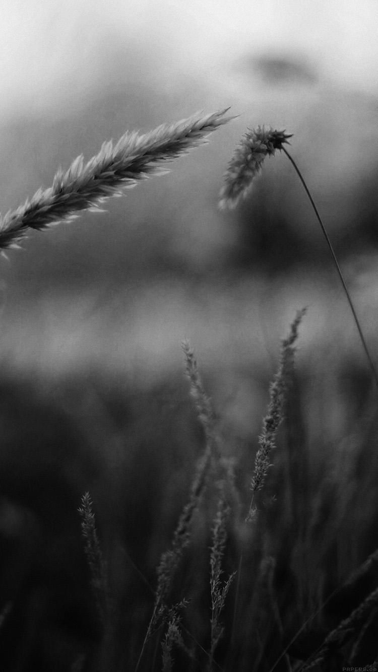 Papers.co-iPhone5-iphone6-plus-wallpaper-mp35-reed-flower-nature-field-bw
