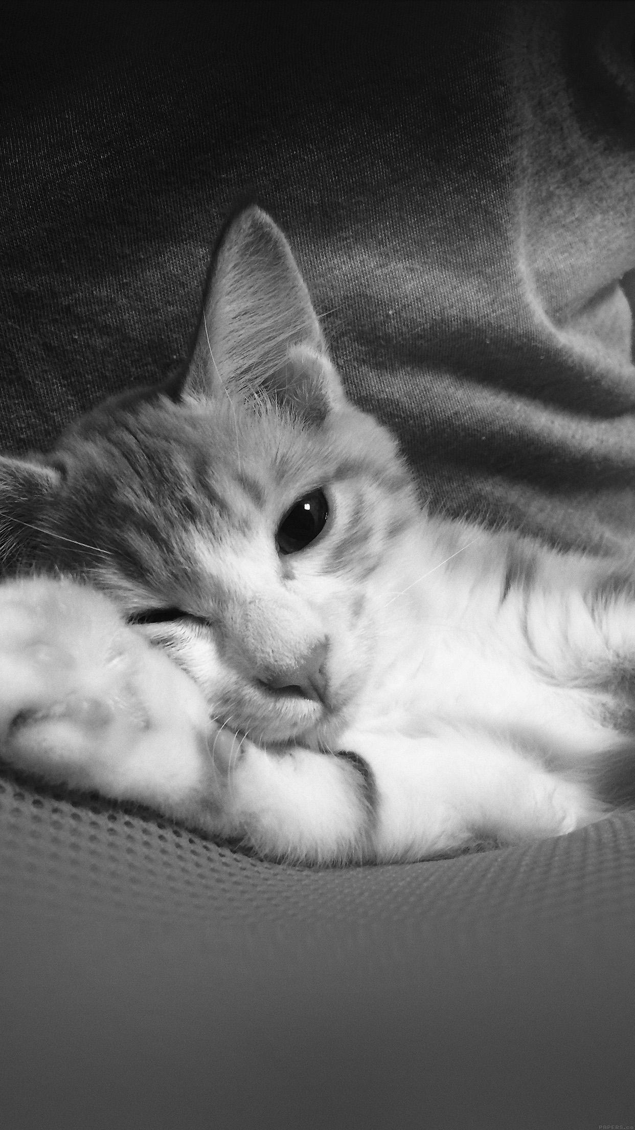 Mp45 Nyangmi Cat Cute Animal Dark Papers Co