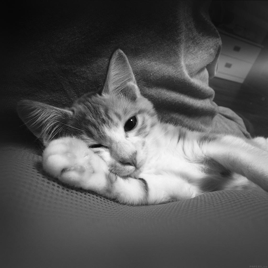 cat essays