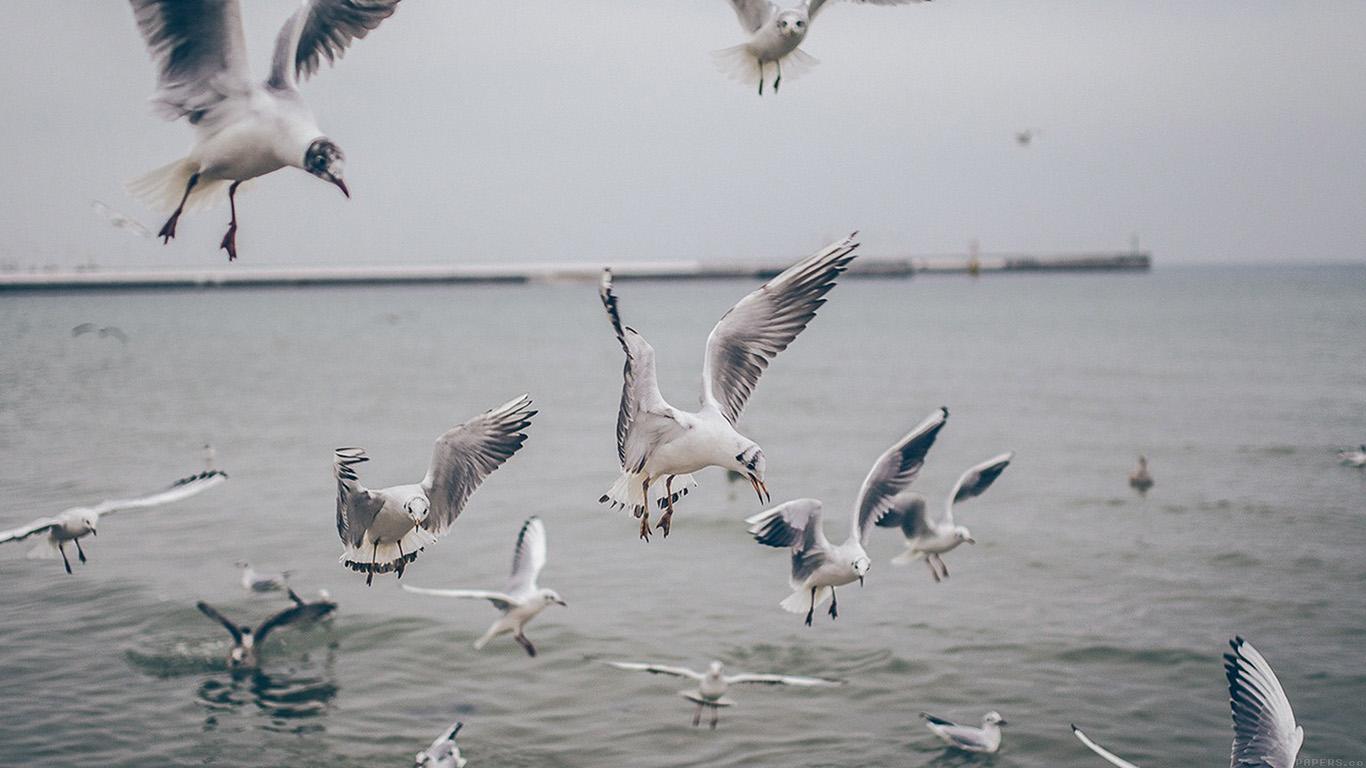 desktop-wallpaper-laptop-mac-macbook-airmp68-seagull-sea-beach-port-nature-animal-wallpaper