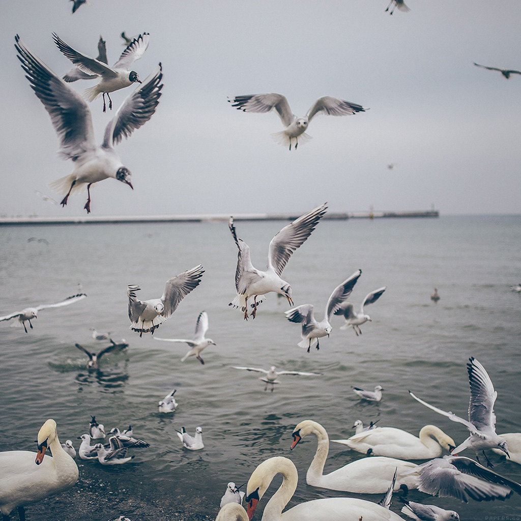 android-wallpaper-mp68-seagull-sea-beach-port-nature-animal-wallpaper