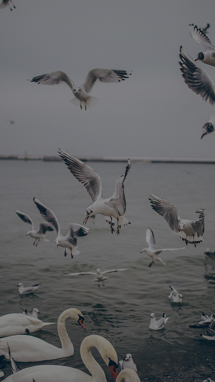 iPhonepapers.com-Apple-iPhone-wallpaper-mp69-seagull-sea-beach-port-dark-nature-animal