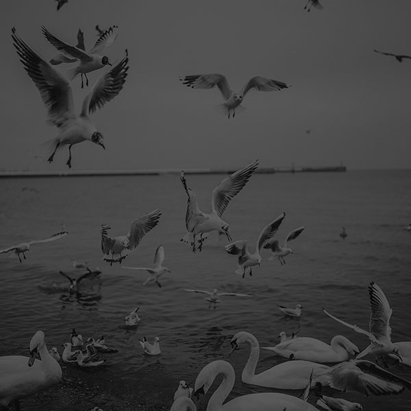 iPapers.co-Apple-iPhone-iPad-Macbook-iMac-wallpaper-mp70-seagull-sea-beach-port-black-nature-animal-wallpaper