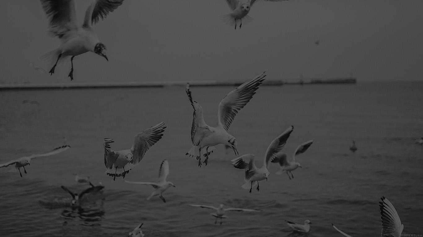 desktop-wallpaper-laptop-mac-macbook-airmp70-seagull-sea-beach-port-black-nature-animal-wallpaper