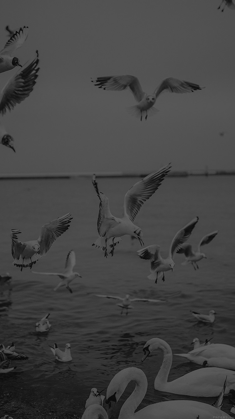 iPhone6papers.co-Apple-iPhone-6-iphone6-plus-wallpaper-mp70-seagull-sea-beach-port-black-nature-animal