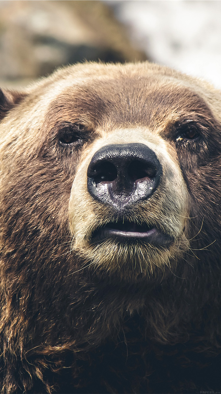 iPhone7papers.com-Apple-iPhone7-iphone7plus-wallpaper-mp73-bear-face-what-the-hell-nature-animal