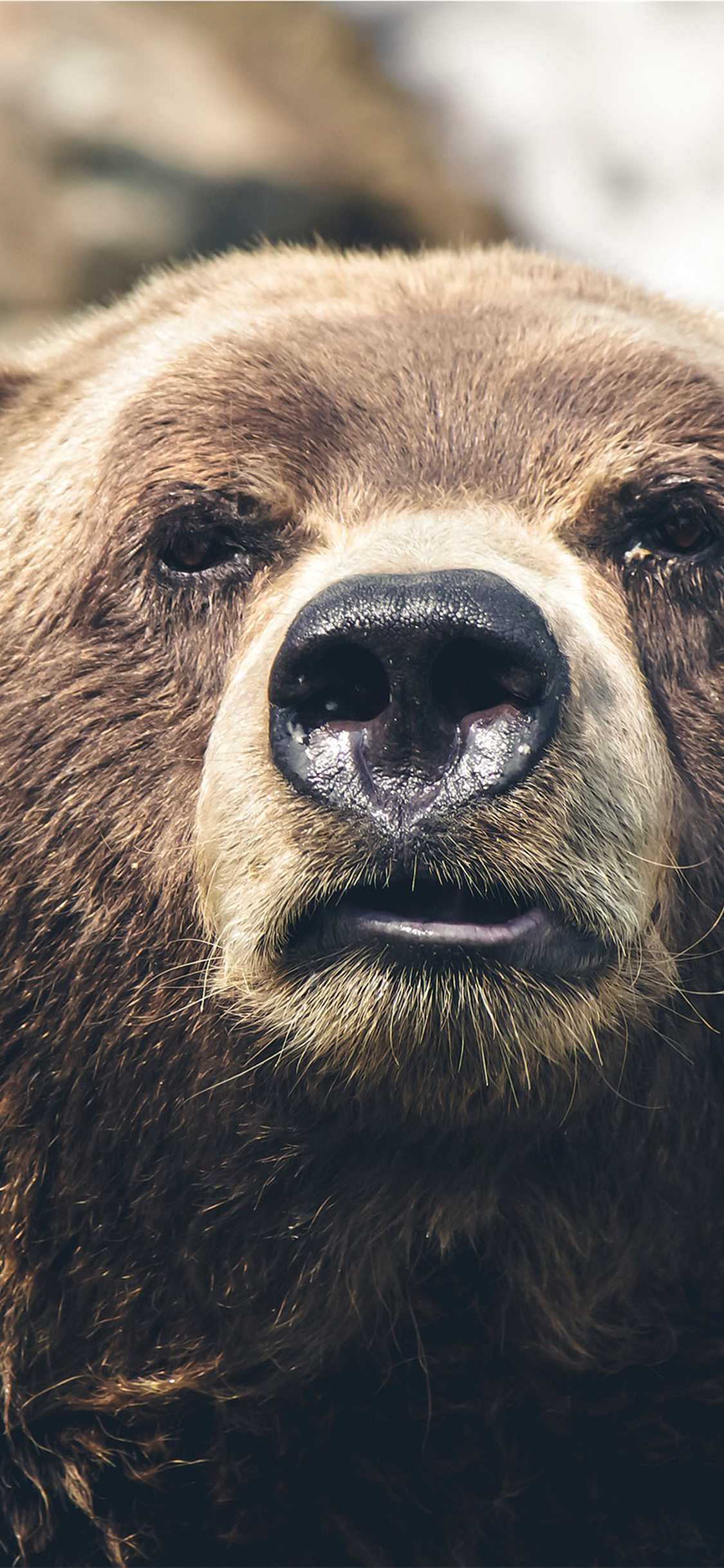 iPhonexpapers.com-Apple-iPhone-wallpaper-mp73-bear-face-what-the-hell-nature-animal