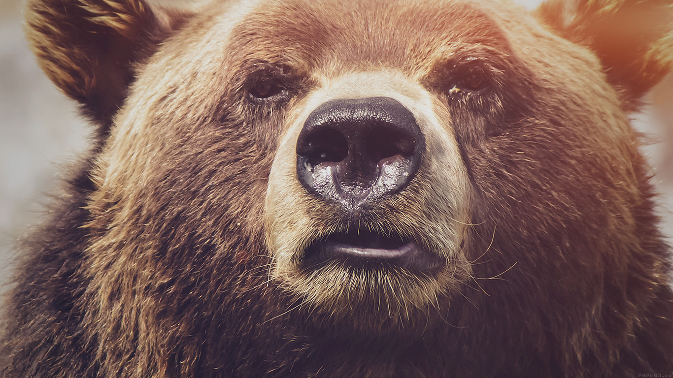desktop-wallpaper-laptop-mac-macbook-airmp74-bear-face-what-the-hell-nature-flare-animal-wallpaper