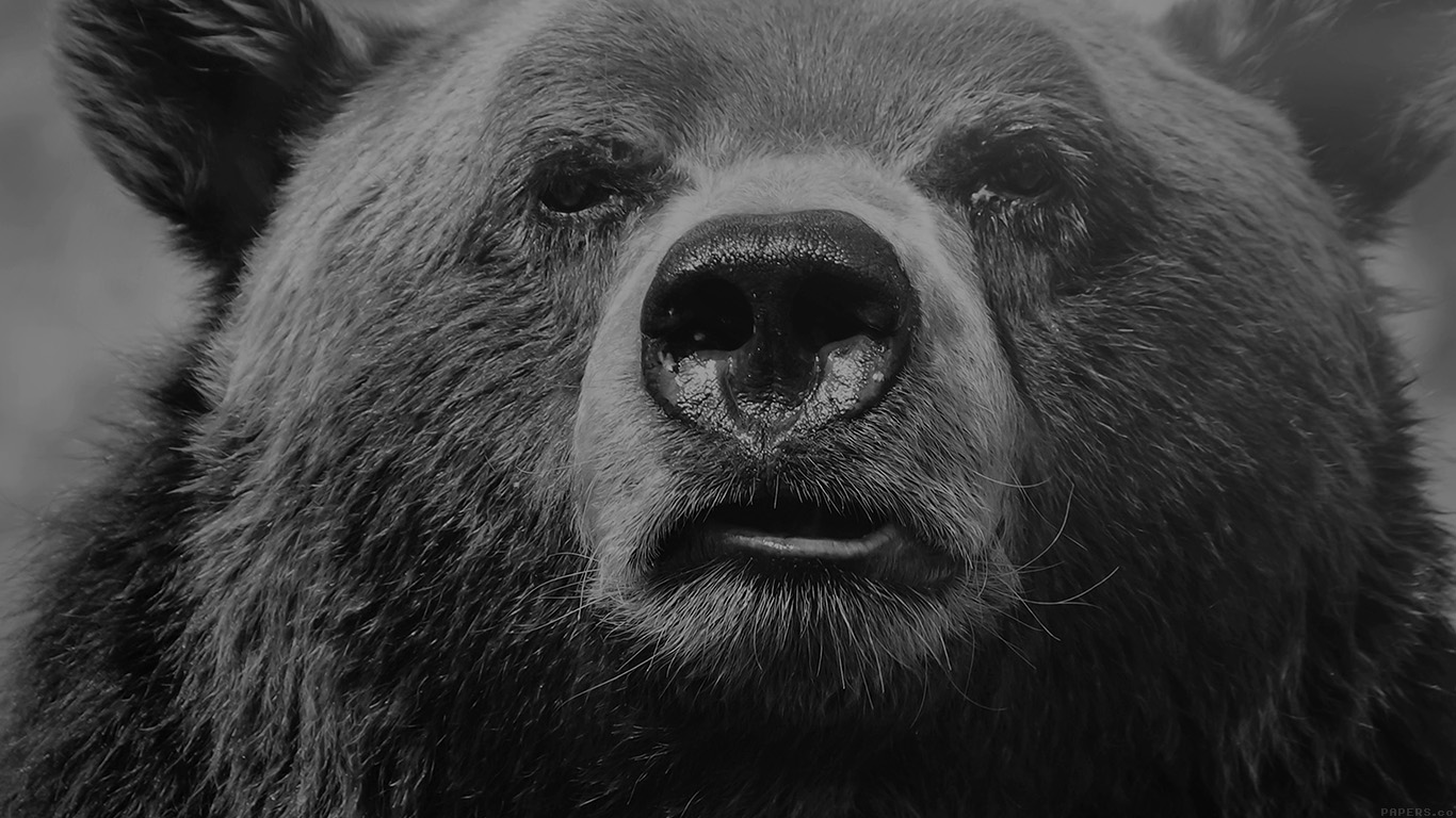 desktop-wallpaper-laptop-mac-macbook-airmp75-bear-face-what-the-hell-nature-bw-dark-animal-wallpaper
