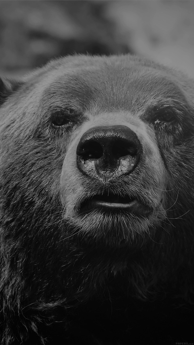 iPhone6papers.co-Apple-iPhone-6-iphone6-plus-wallpaper-mp75-bear-face-what-the-hell-nature-bw-dark-animal