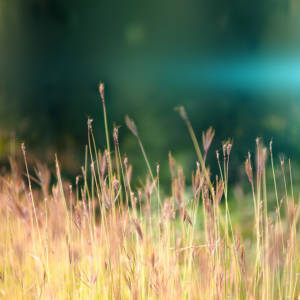 wallpaper-mp88-reed-weed-flower-nature-flare-blue-wallpaper