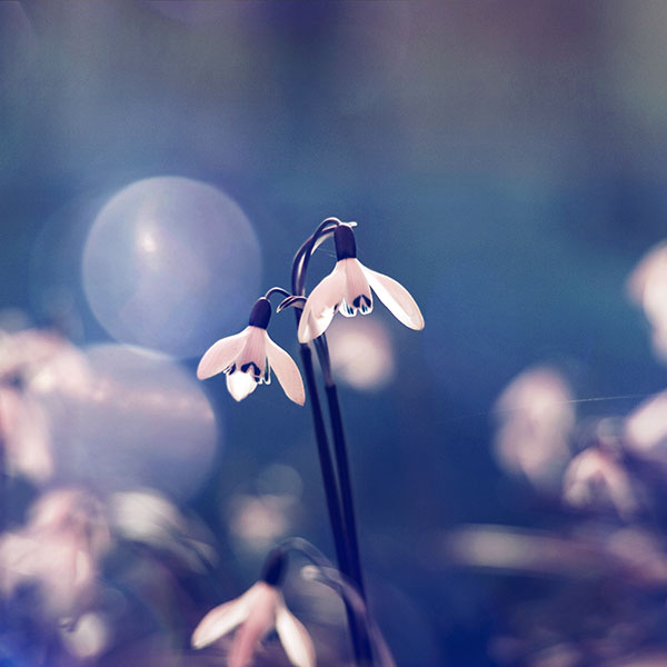 iPapers.co-Apple-iPhone-iPad-Macbook-iMac-wallpaper-mq00-uknown-flower-blue-bokeh-flare-nature-wallpaper
