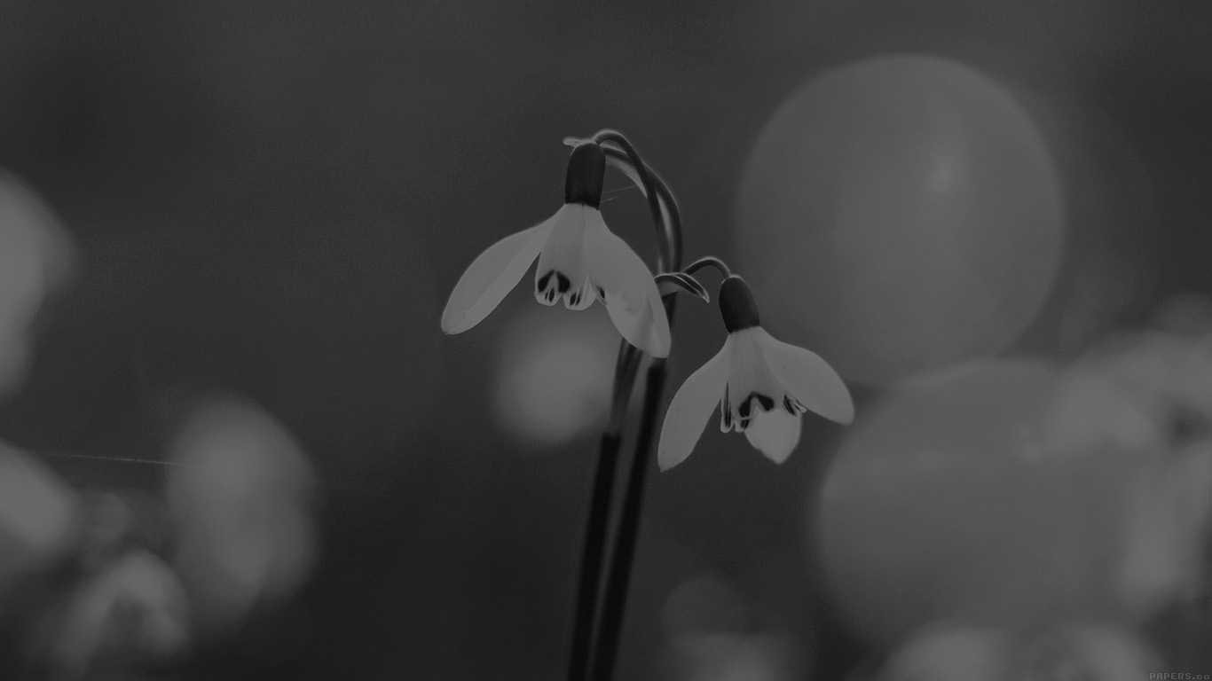 desktop-wallpaper-laptop-mac-macbook-airmq01-uknown-flower-blue-bokeh-flare-dark-black-bw-wallpaper