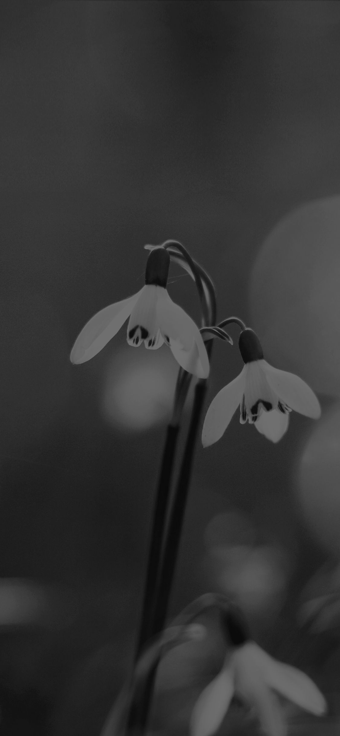 iPhoneXpapers.com-Apple-iPhone-wallpaper-mq01-uknown-flower-blue-bokeh-flare-dark-black-bw