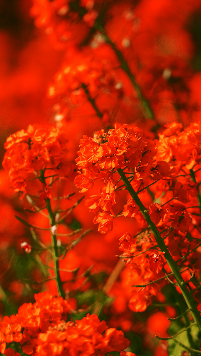 Freeios8 Com Iphone Wallpaper Mq18 Red Flower Spring Fun