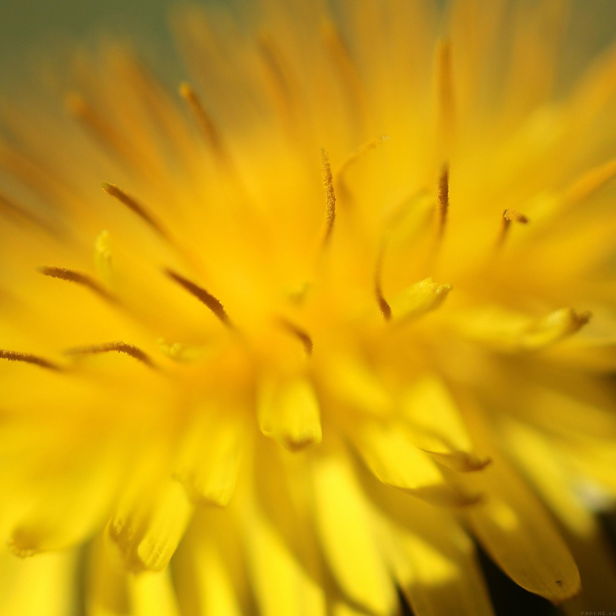 Freeios8 iphone wallpaper mq34 yellow flower zoom nature normal mightylinksfo