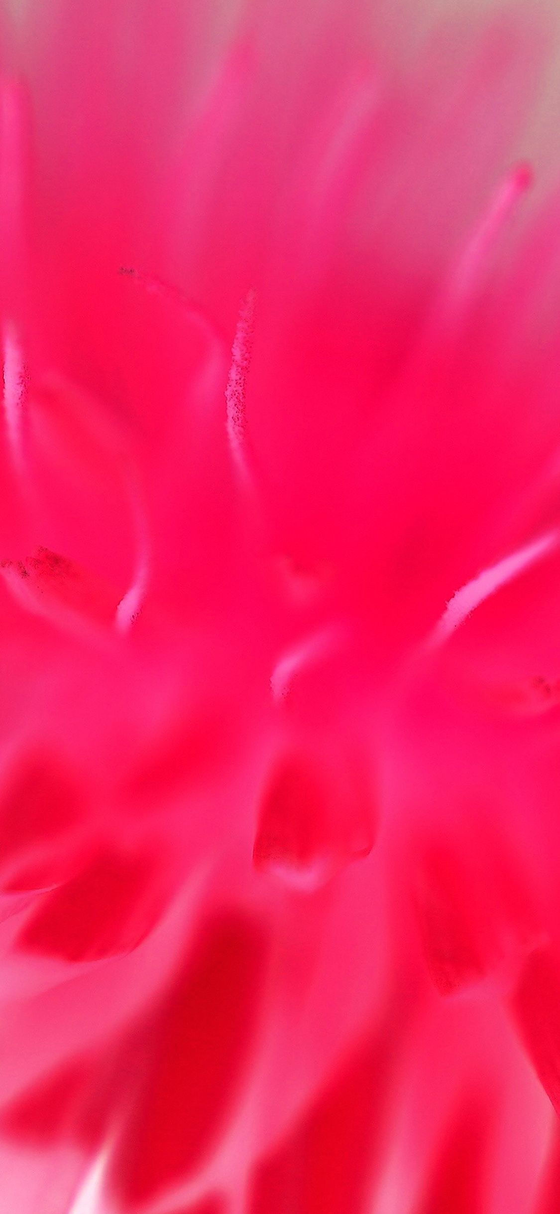 iPhoneXpapers.com-Apple-iPhone-wallpaper-mq36-red-pink-flower-zoom-nature