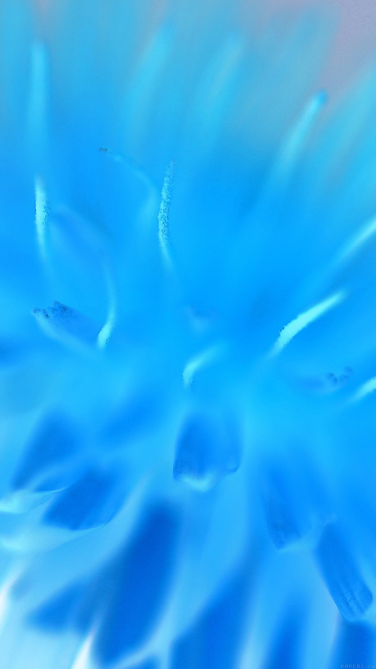 iPhone7papers.com-Apple-iPhone7-iphone7plus-wallpaper-mq37-blue-flower-zoom-nature