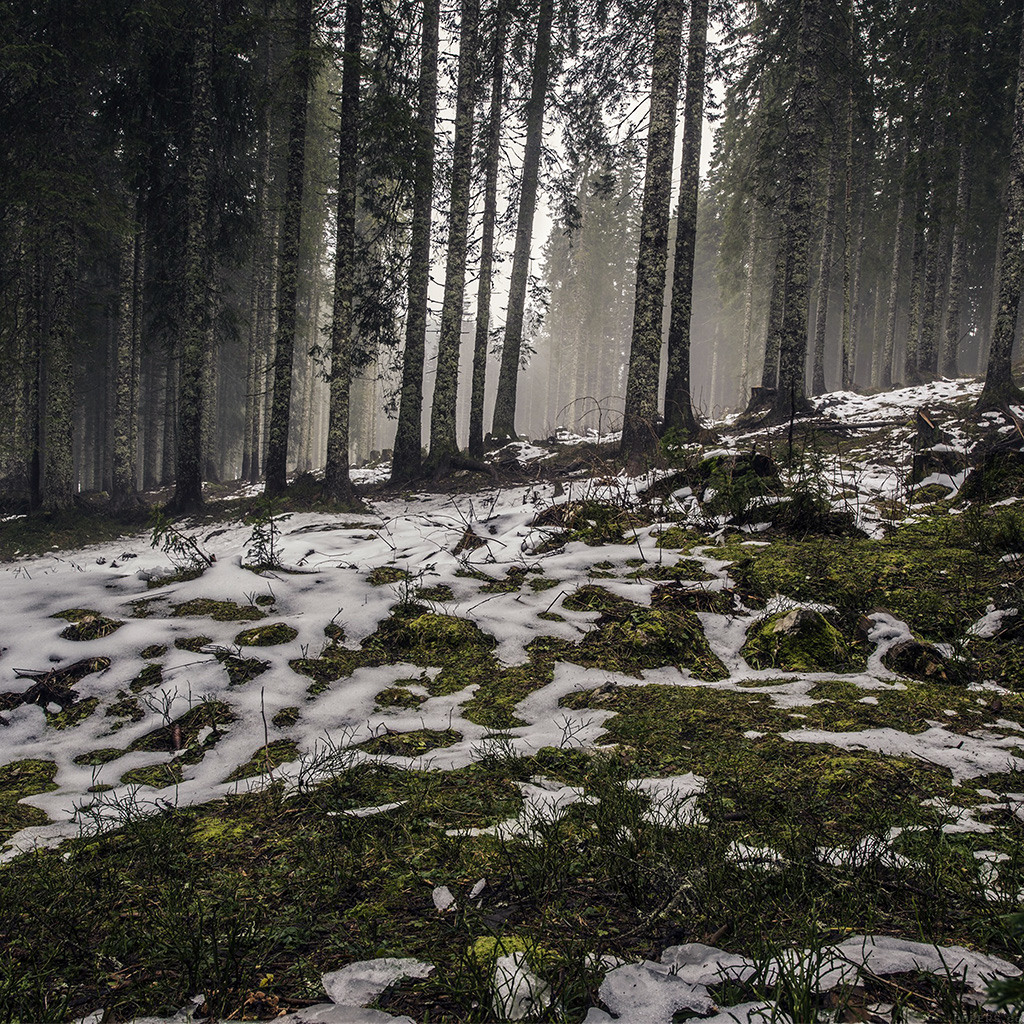 android-wallpaper-mq52-mountain-snow-woods-nature-wallpaper