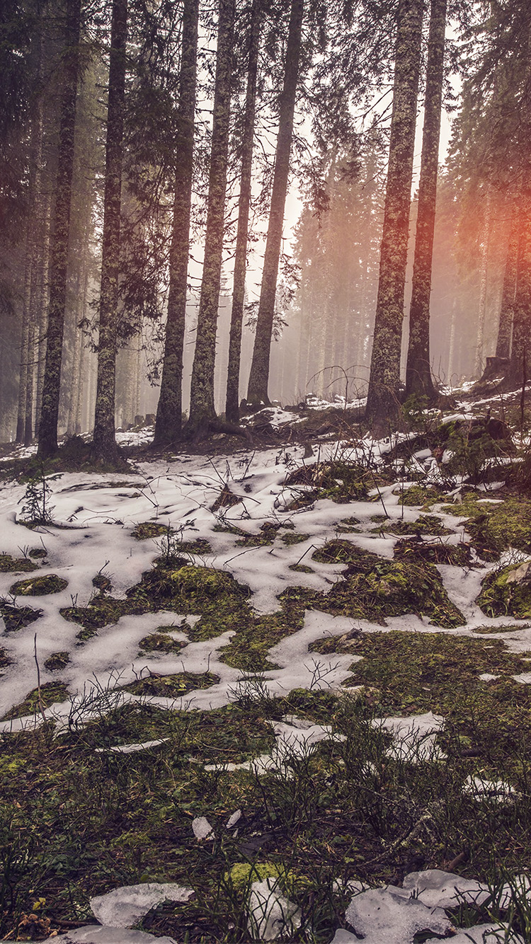 iPhone6papers.co-Apple-iPhone-6-iphone6-plus-wallpaper-mq53-mountain-snow-woods-nature-flare