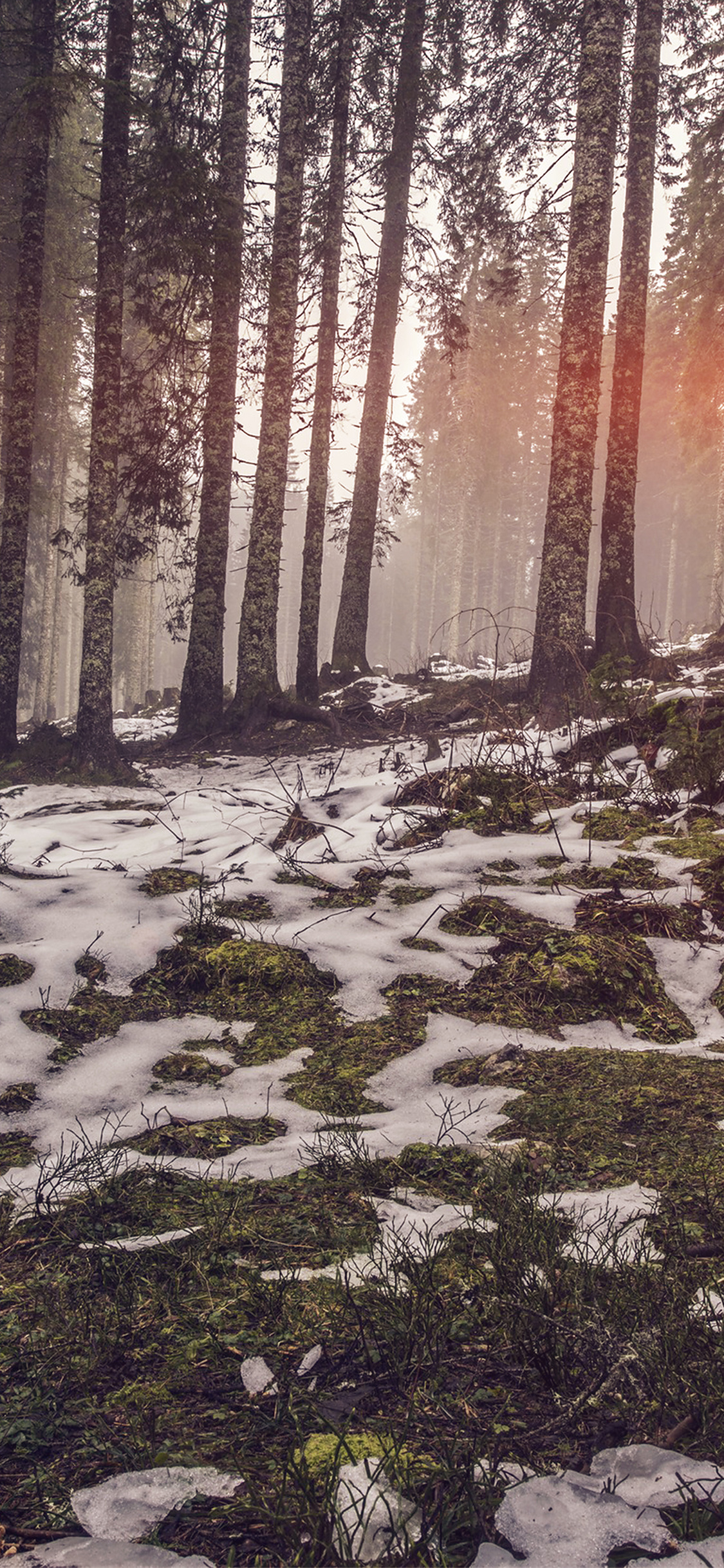 iPhoneXpapers.com-Apple-iPhone-wallpaper-mq53-mountain-snow-woods-nature-flare