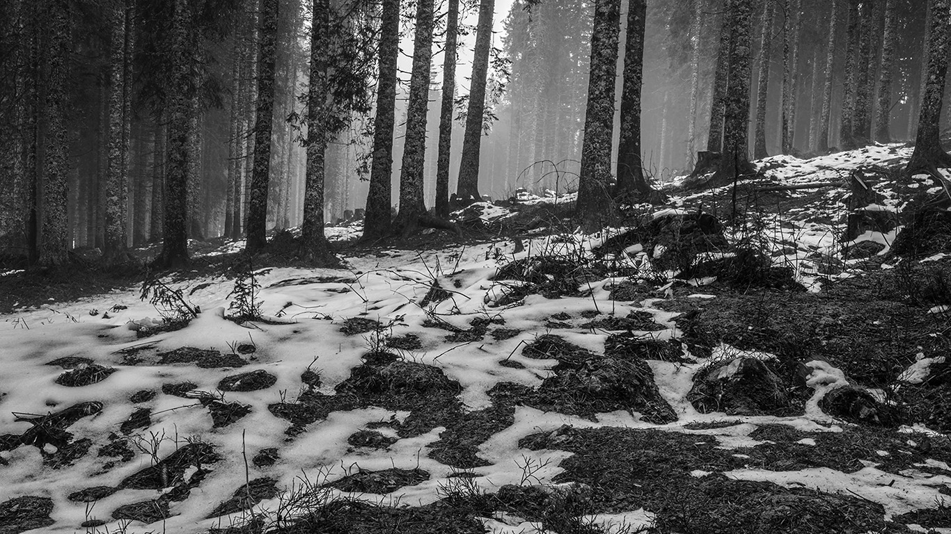 desktop-wallpaper-laptop-mac-macbook-air-mq54-mountain-snow-woods-nature-dark-bw-wallpaper