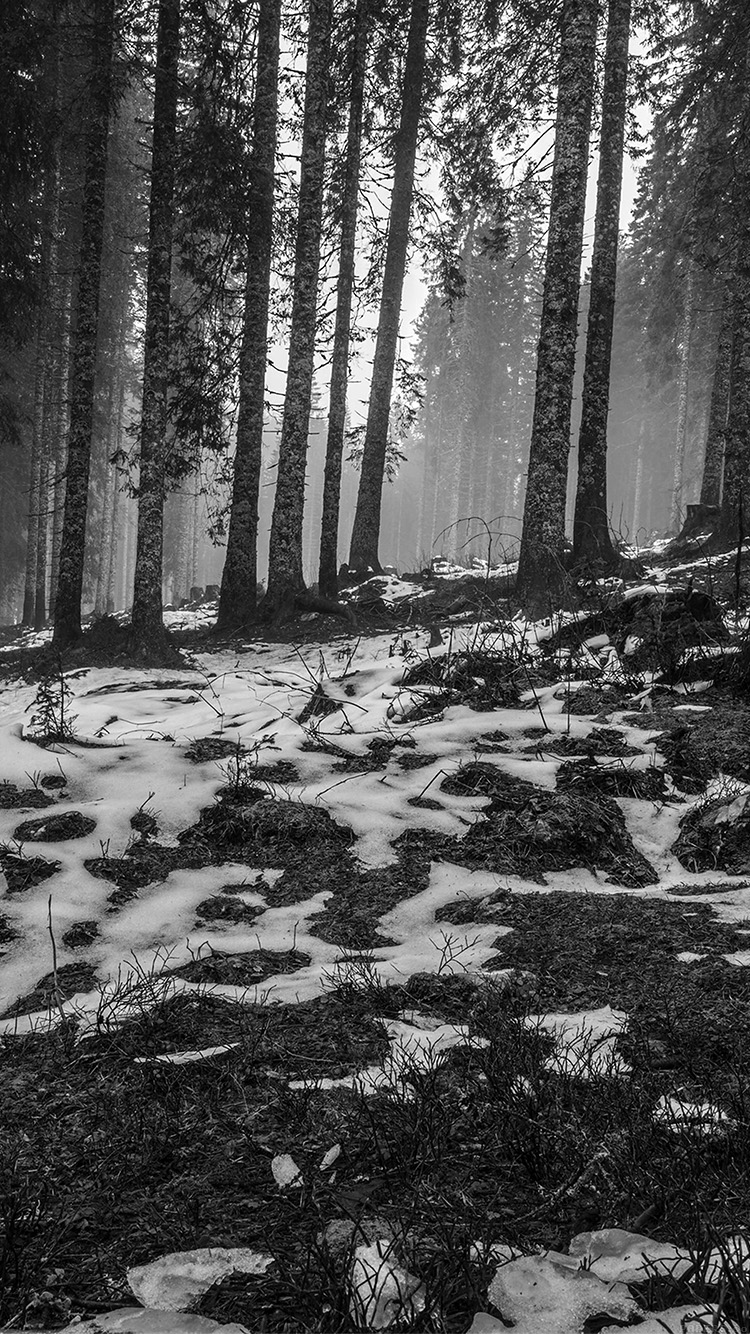 iPhone6papers.co-Apple-iPhone-6-iphone6-plus-wallpaper-mq54-mountain-snow-woods-nature-dark-bw