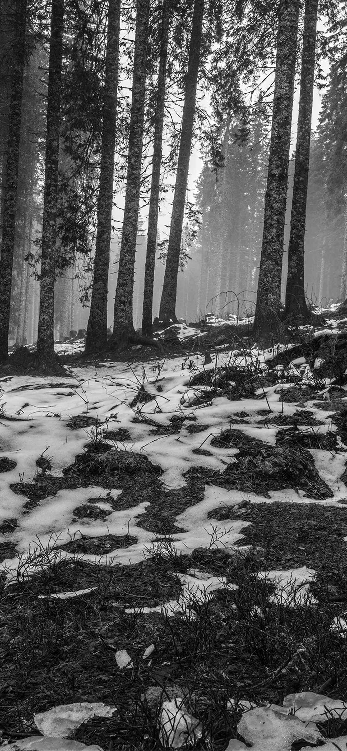 iPhoneXpapers.com-Apple-iPhone-wallpaper-mq54-mountain-snow-woods-nature-dark-bw