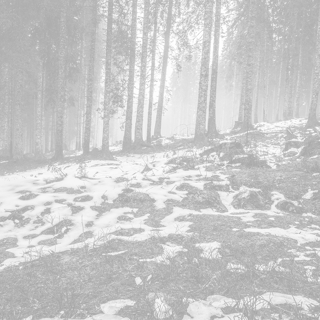 wallpaper-mq55-mountain-snow-woods-nature-white-bw-wallpaper