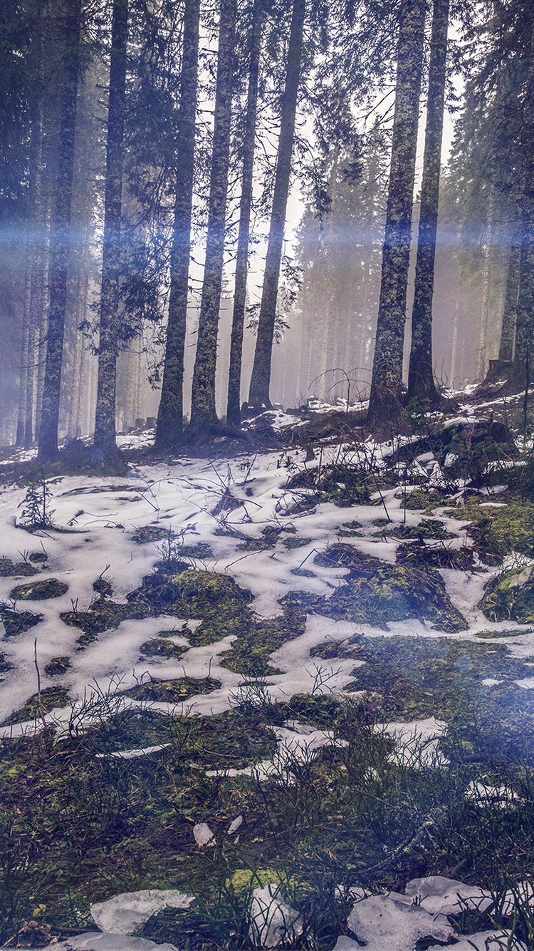 iPhonepapers.com-Apple-iPhone8-wallpaper-mq56-mountain-snow-woods-nature-blue-flare