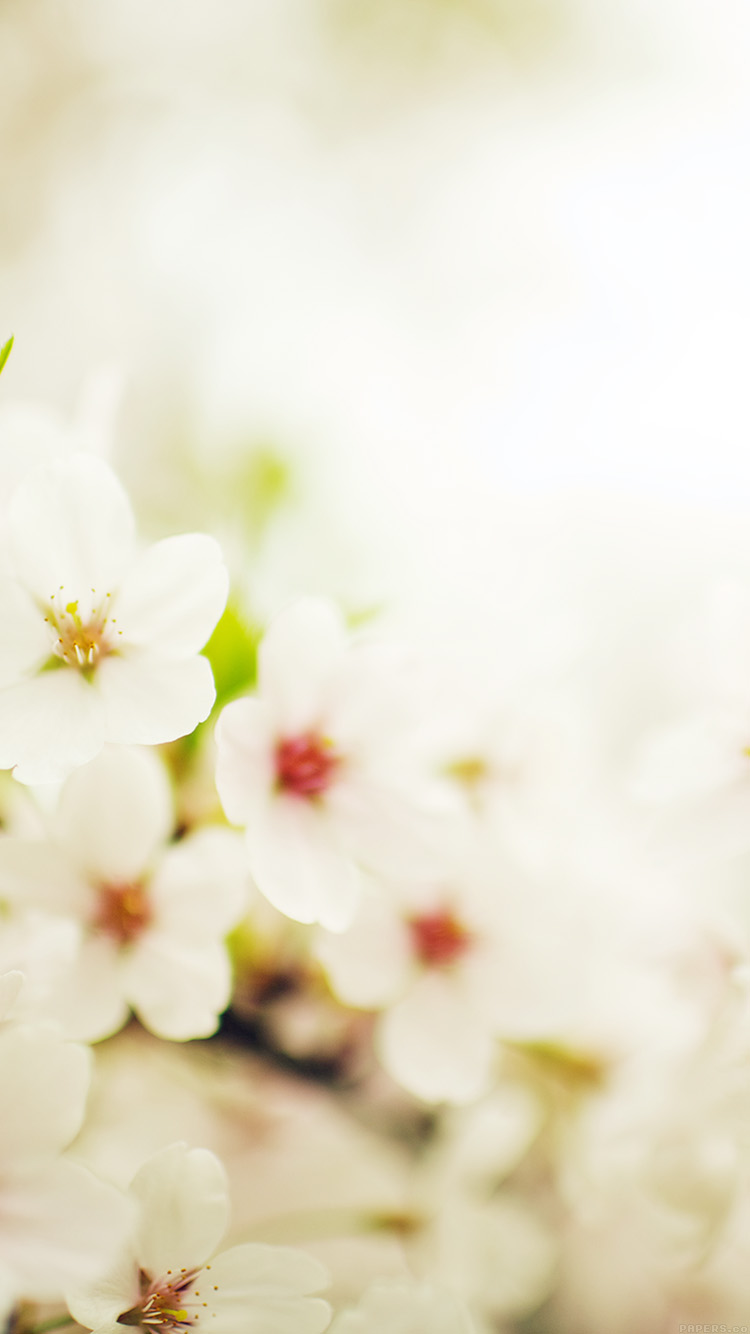 iPhone6papers.co-Apple-iPhone-6-iphone6-plus-wallpaper-mq75-blossom-cherry-spring-sakura-nature-flower