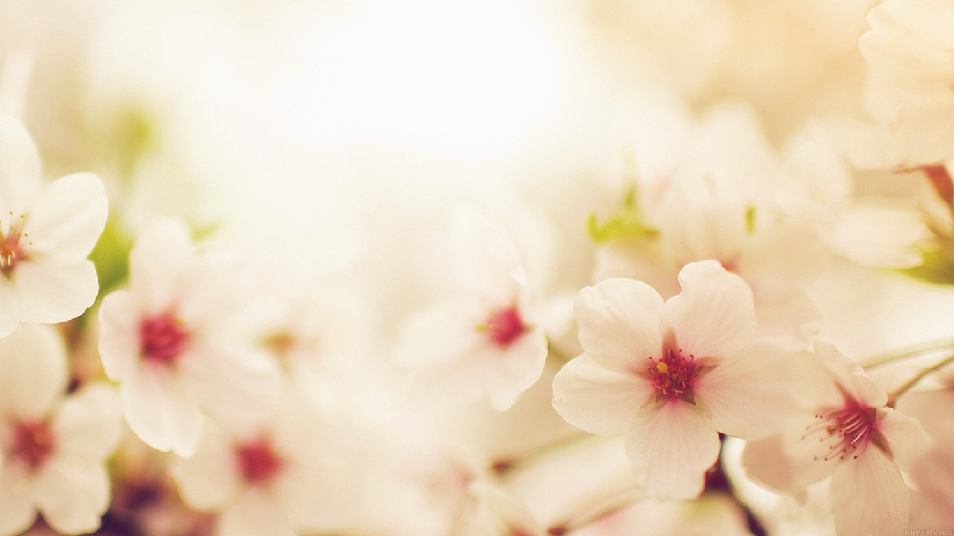 desktop-wallpaper-laptop-mac-macbook-air-mq76-blossom-cherry-spring-red-sakura-nature-flower-wallpaper