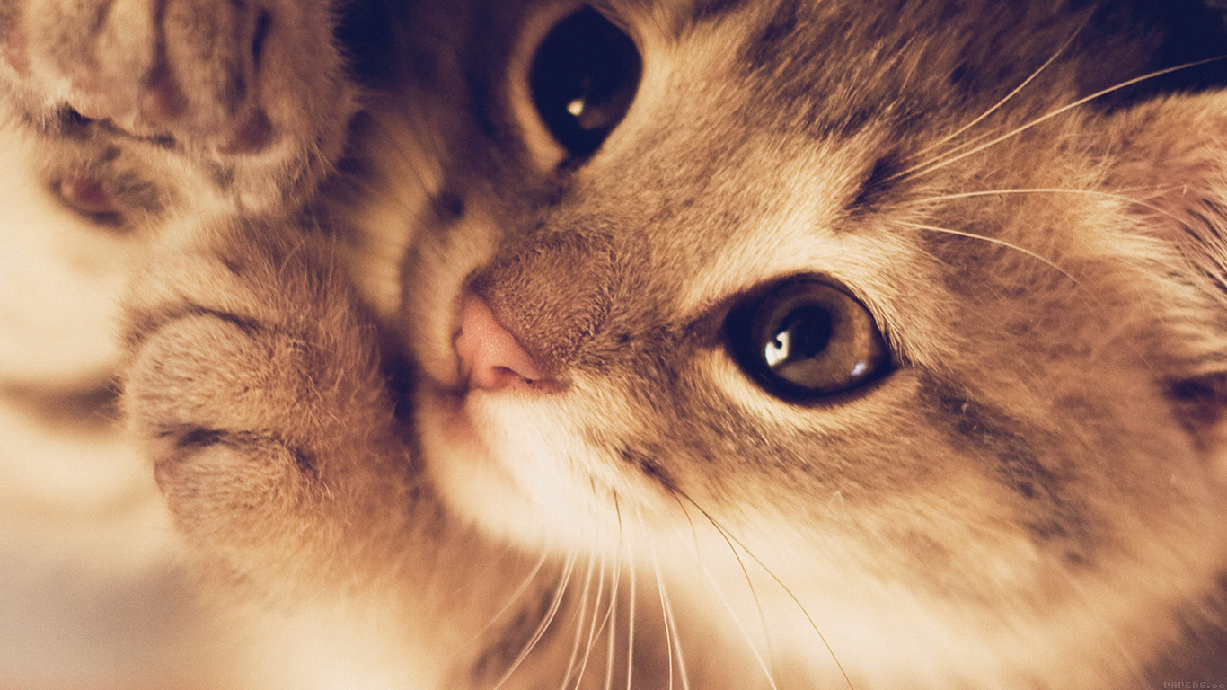 Wallpaper For Desktop Laptop Mq77 Cute Cat Kitten Nature Animal