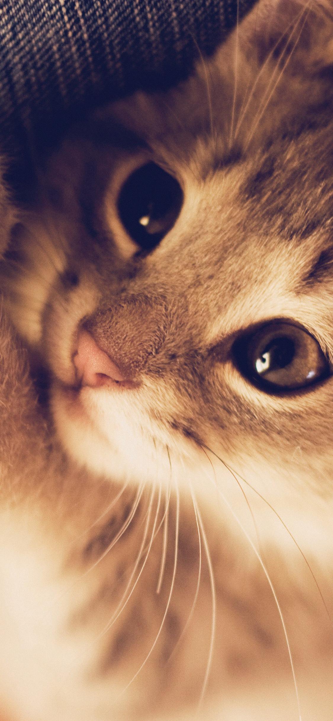 Iphonexpapers Mq77 Cute Cat Kitten Nature Animal