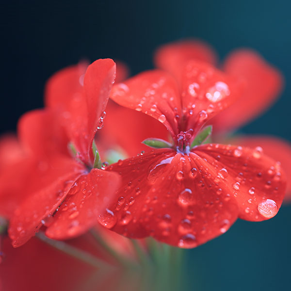 iPapers.co-Apple-iPhone-iPad-Macbook-iMac-wallpaper-mr30-spring-flower-party-red-nature-wallpaper