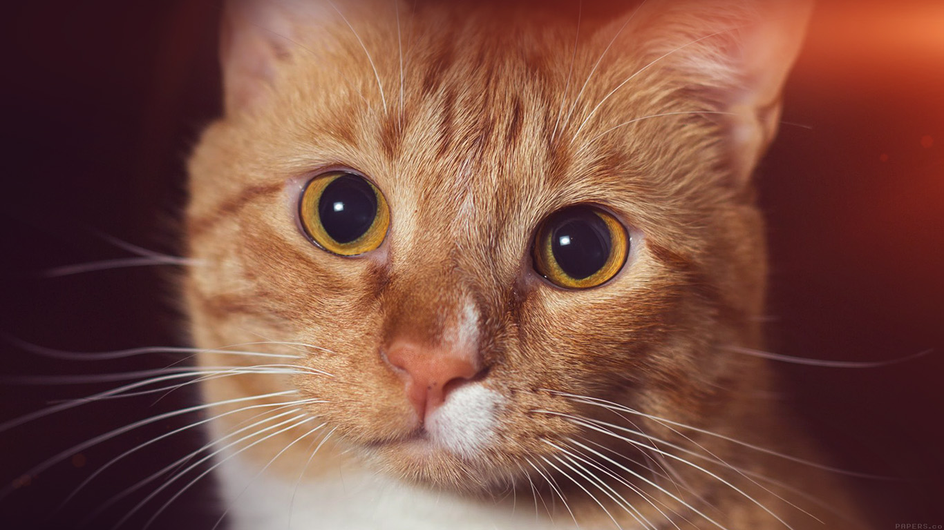 desktop-wallpaper-laptop-mac-macbook-air-mr33-cat-face-eye-animal-cute-nature-flare-orange-wallpaper